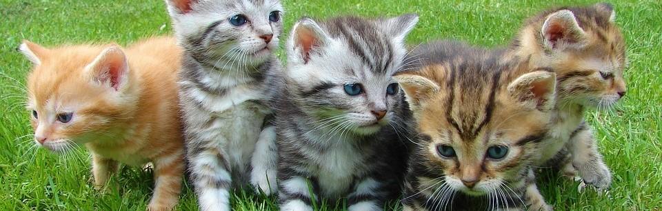 angelo-andrea-vegliante-purrli-gatto-internet-fusa - header